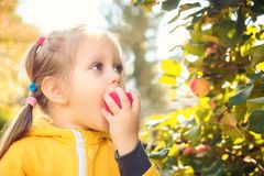 小女孩婴孩吃季节性苹果 库存图片