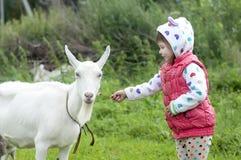 小女孩室外本质上喂养一只白色山羊的 库存照片