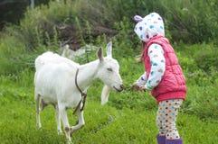 小女孩室外本质上喂养一只白色山羊的 免版税库存图片