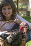 小女孩小农夫拿着一只火鸡 图库摄影