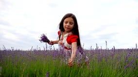 小女孩收集一束淡紫色花 影视素材