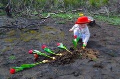 小女孩种植在被烧的地面的郁金香 免版税库存图片