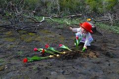 小女孩种植在被烧的地面的郁金香 图库摄影