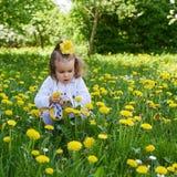 小女孩草甸聚集黄色蒲公英 库存照片