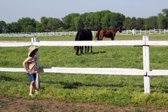 小女孩观看的马在畜栏 库存图片