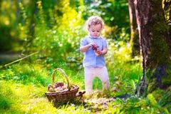 小女孩采摘蘑菇在秋天公园 免版税库存照片