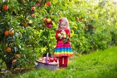 小女孩从树的采摘苹果在果树园 免版税库存照片