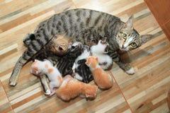 小婴孩逗人喜爱的小猫哺乳妈妈猫木头背景 库存照片