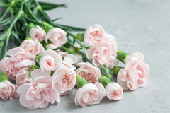 小嫩桃红色康乃馨在与拷贝空间, mother& x27的灰色混凝土开花; s天贺卡背景,水平 免版税库存图片