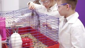 小学生在生物课的举行兔子 股票录像