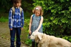 小学童在途中遇见了到学校一条大狗 库存照片