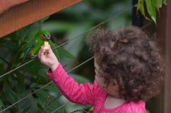 小孩喂养一只无花果鹦鹉 库存图片
