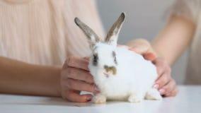 小孩在母亲手,抚摸和使用上的敬佩蓬松白色兔子 影视素材