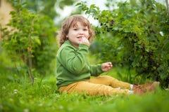 小孩女孩吃从灌木的黑醋栗 儿童有父亲的乐趣一起使用 图库摄影