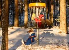 小孩子使用与塑料盘的和爱犬在圆盘打高尔夫球同水准 免版税库存图片