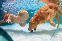 小孩游泳水中和戏剧与狗 库存图片