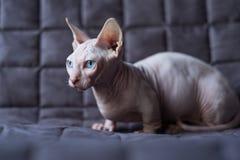 小孩猫 图库摄影