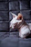 小孩猫 免版税图库摄影