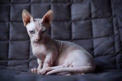 小孩猫 免版税库存照片