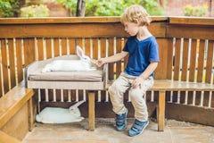 小孩男孩在动物园里哺养兔子 持续力的自然概念,对世界的爱,对动物的尊敬和爱 免版税库存图片
