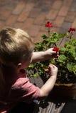 小孩采摘红色花 免版税图库摄影