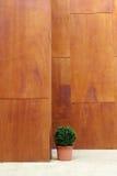 小室内盆的修剪的花园树 免版税图库摄影