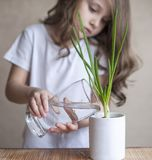 小小孩女孩拿着与水和浇灌年幼植物的一块透明玻璃 新有同情心的寿命 儿童` s手 免版税库存照片