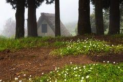 小小屋在一个黑暗的有薄雾的森林里 免版税库存图片