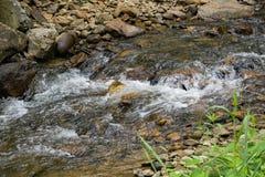 小小河和和岩石 库存照片