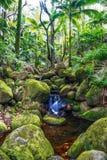 小小河在大海岛密林。夏威夷。 图库摄影