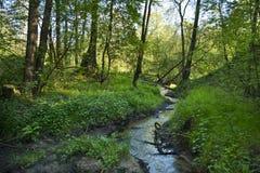 小小河在春天期间的森林 免版税库存照片