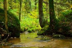 小小河在秋天森林里 免版税库存图片