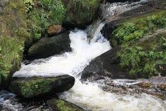 小小河在黑森林 库存照片
