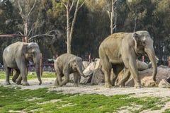 小小牛椰子大象在掌上型计算机词根附近的系列母亲 库存图片