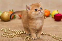 小小猫和圣诞节装饰 免版税库存照片