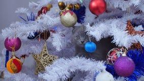 小小猫在圣诞树 免版税库存图片