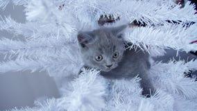 小小猫在圣诞树 库存照片