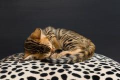 小小猫在豹子软的毯子睡觉 库存照片