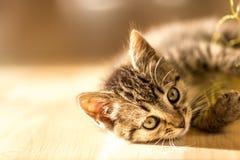 小小猫饮用水 免版税图库摄影