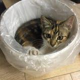 小小猫,放置在容器 图库摄影