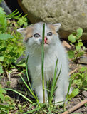 小小猫1 库存照片