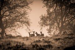 小小组在小山的上面的小鹿 免版税库存图片