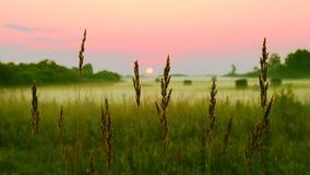 小尖峰在桃红色日落背景现出轮廓 镇静风景农村风景日出或日落 美丽的绿草 股票视频