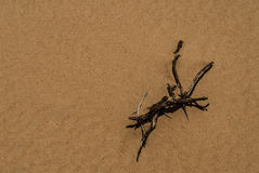 小尖峰在沙子增长 免版税库存图片