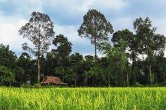 小屋和稻田风景 库存照片