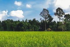 小屋和稻田风景 库存图片