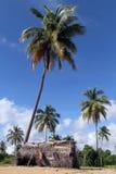 小屋在树下 免版税图库摄影