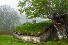 小屋在森林里 免版税库存图片