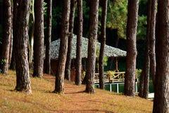 小屋在森林里 库存图片