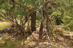 小屋在长得太大的森林背景中 免版税图库摄影